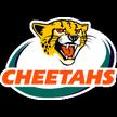 Cheetahs Rugby